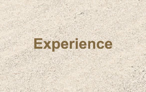 Our Team has Experience