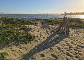 East Bay Regional Park District, Albany Beach Restoration and Public Access Improvements